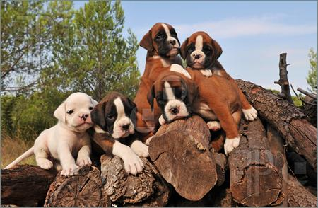 Best Place To Buy Purebred Dogs