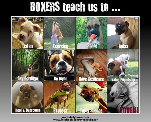 Boxers teach us to