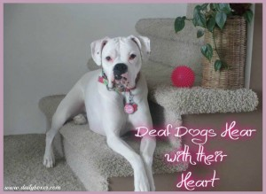 deaf dogs hear with their heart collage