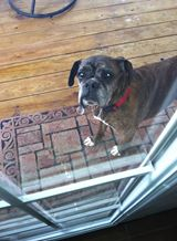 Posted by Dawn on www.facebook.com/mydailyboxer