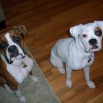 daisy and rosco new